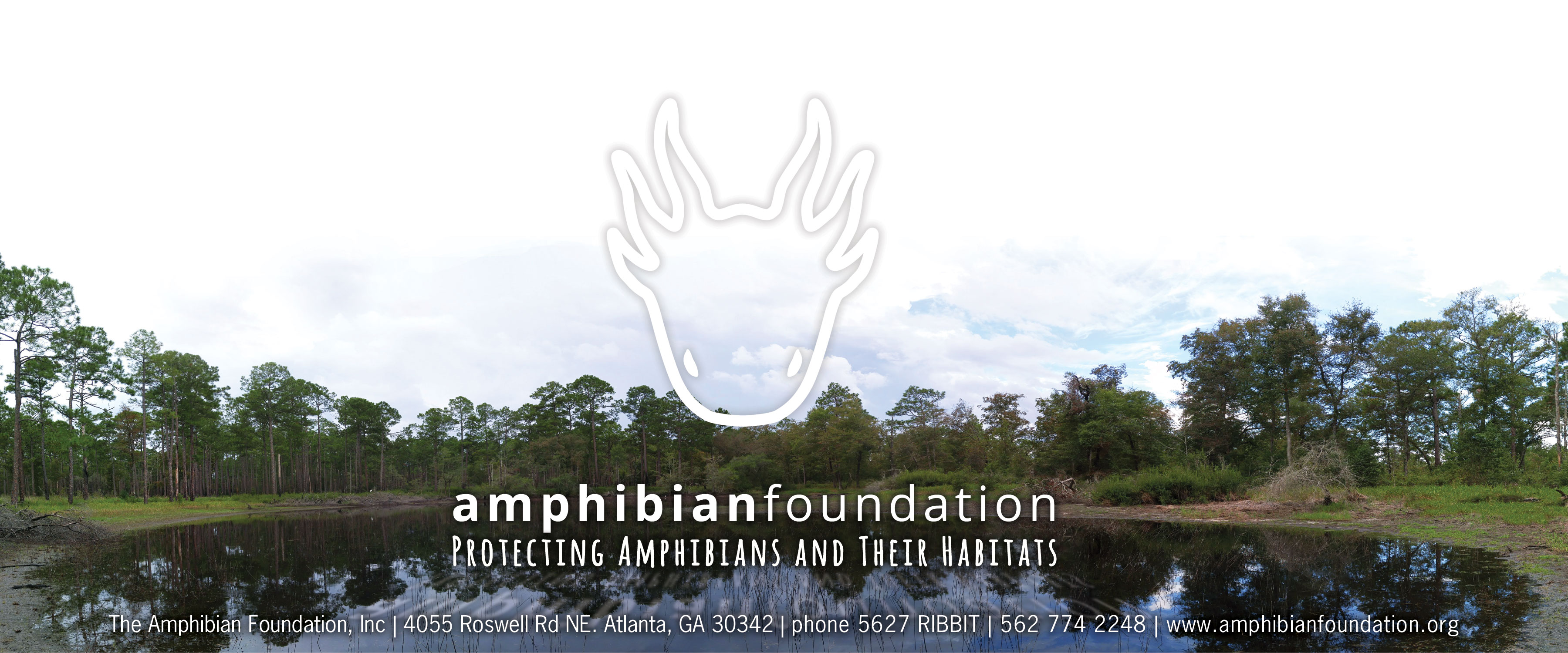 The Amphibian Foundation Logo