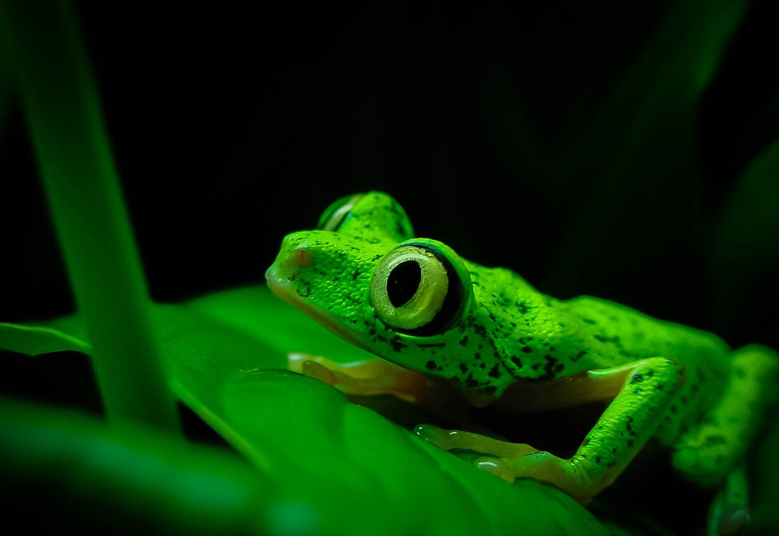 We need your help to save amphibians!